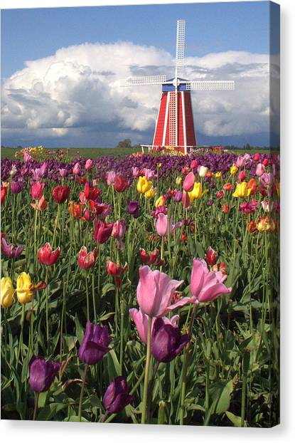 Windmill In The Tulips Canvas Print