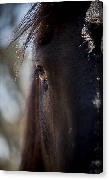 Window Into The Gentle Giant's Soul Canvas Print