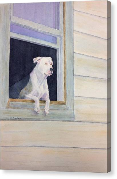 Window Watcher Canvas Print by Mary Gehley