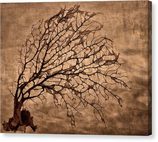 Fallen Tree Canvas Print - Windowpane Coral by Carol Leigh