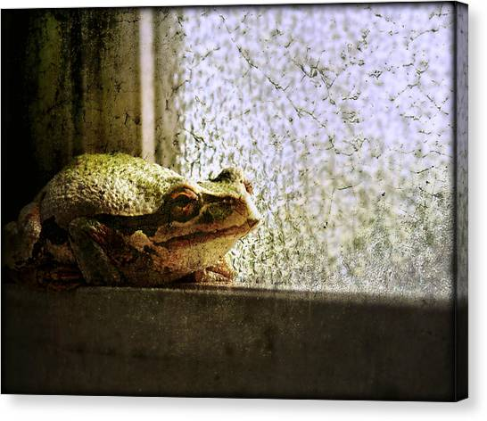 Windowsill Visitor Canvas Print