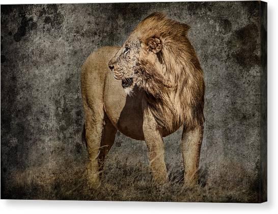 Rhinocerus Canvas Print - Windswept Lion by Mike Gaudaur