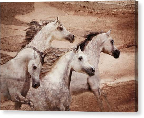 Canvas Print featuring the photograph Windswept by Melinda Hughes-Berland