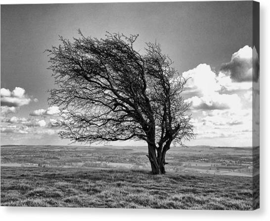 Windswept Tree On Knapp Hill Canvas Print