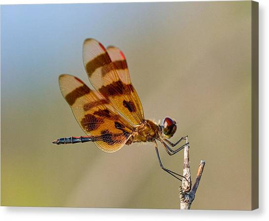 Windy Day Dragonfly Canvas Print