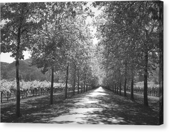 Wine Country Napa Black And White Canvas Print