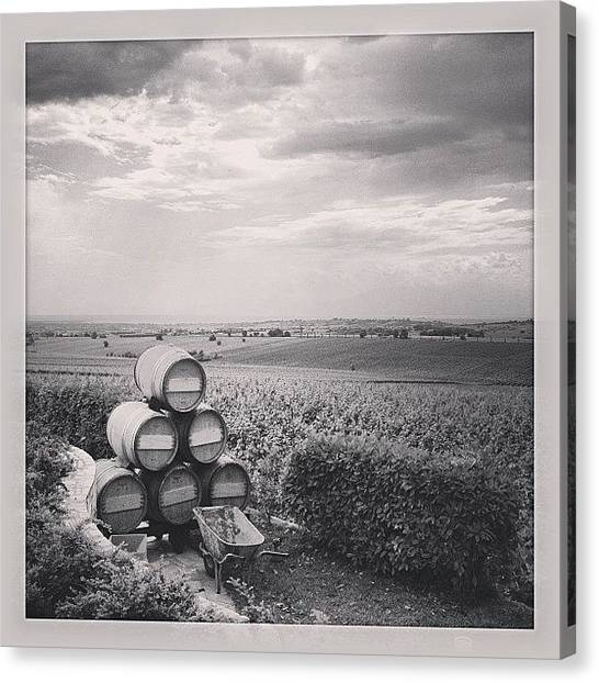 White Wine Canvas Print - Winery by Evangelos Charitopoulos