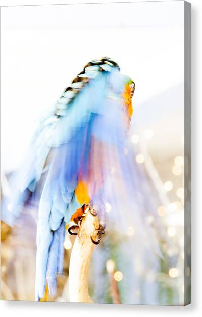 Wing Dream Canvas Print