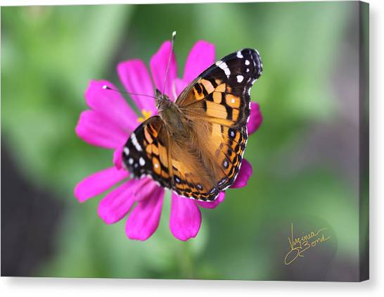 Winged Beauty Canvas Print
