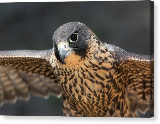 Winged Portrait Canvas Print