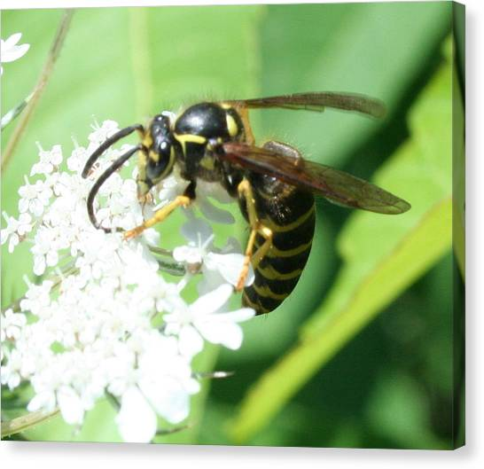 Wings And White Flowers Canvas Print by Stephen Melcher