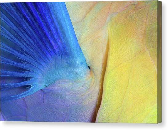 Parrots Canvas Print - Wings by Andrey Narchuk