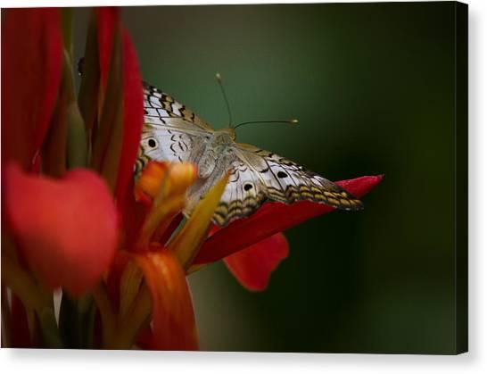 Anartia Jatrophae Canvas Print - Wings Of A Butterfly  by Saija  Lehtonen