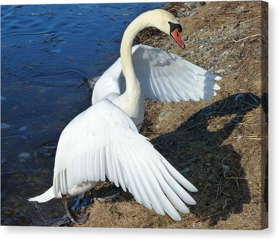Wings Of A Swan Canvas Print