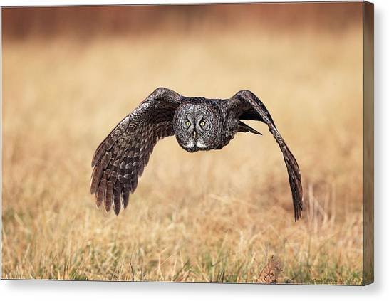 Wings Of Motion Canvas Print