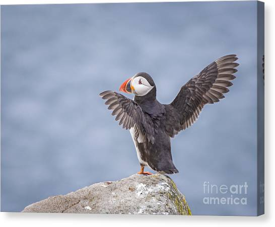 Puffins Canvas Print - Wings To Fly  by Evelina Kremsdorf