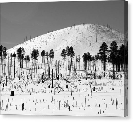 Winter After Fire-san Francisco Peaks Canvas Print