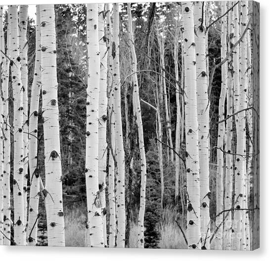 Mountain Canvas Print - Winter Approaches by David Millenheft