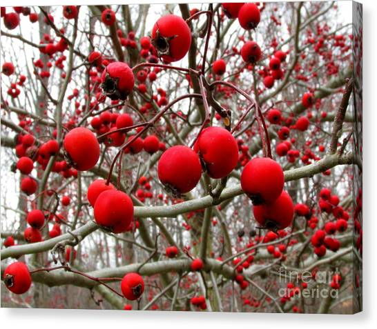 Winter Berryscape Canvas Print