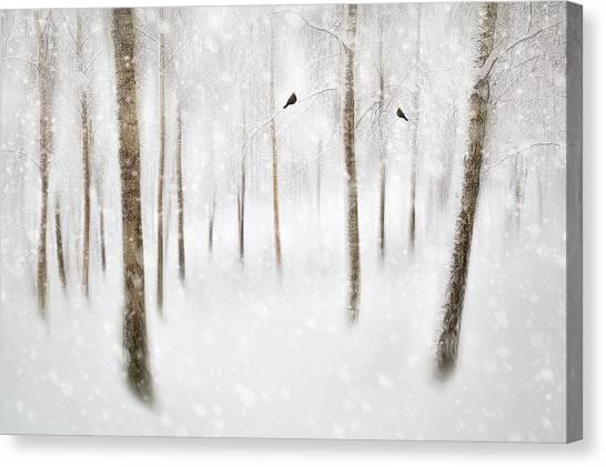 Birch Canvas Print - Winter Birches by Gustav Davidsson