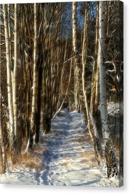 Winter Birches Canvas Print by Lutz Baar