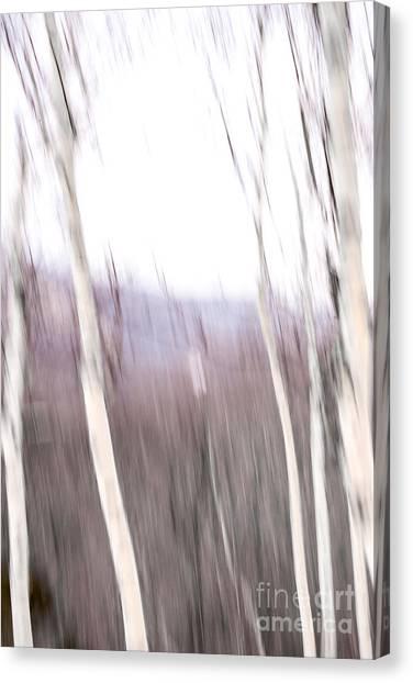 Winter Birches Tryptich 3 Canvas Print