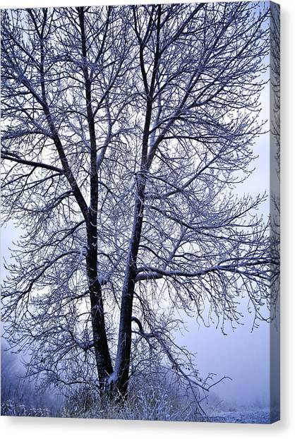 Winter Tree In Blue Fog Canvas Print