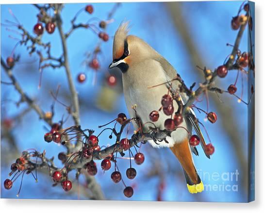 Winter Colors.. Canvas Print