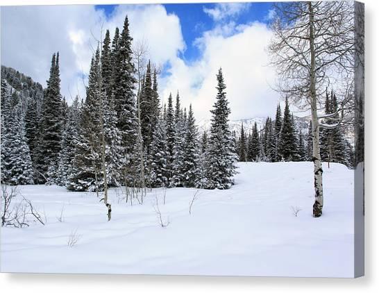 Winter Canvas Print by Darryl Wilkinson