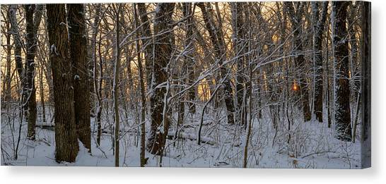 Winter Dawn Canvas Print