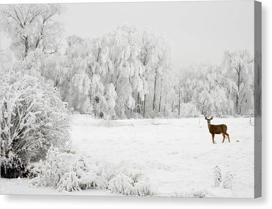 Winter Doe Canvas Print