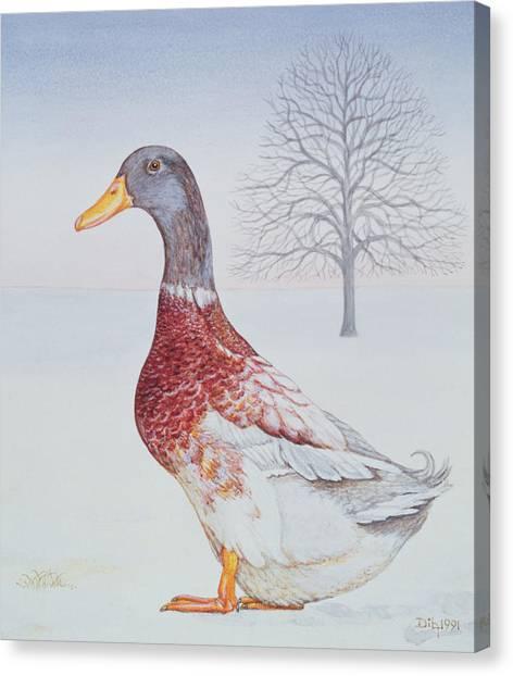 Drake Canvas Print - Winter Drake by Ditz