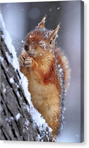 Squirrels Canvas Print - Winter by Ervin Kobak?i