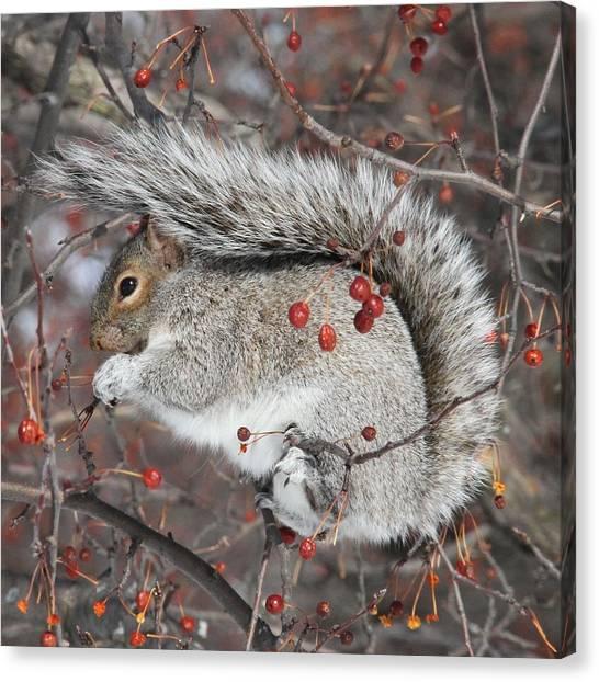 Winter Feast Canvas Print