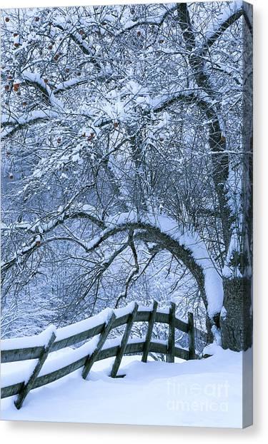 Winter Fence Canvas Print