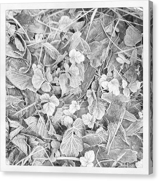 Snowflakes Canvas Print - Winter Flow by Raimond Klavins