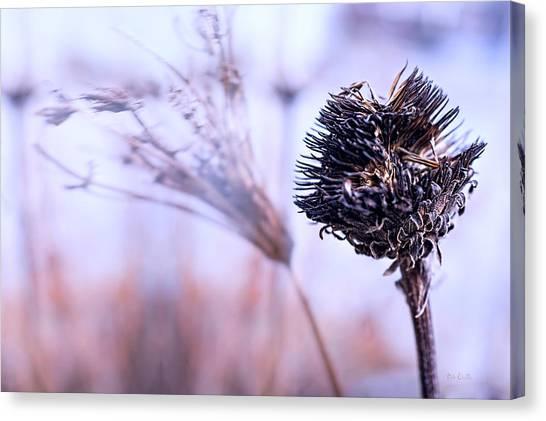 Impressionistic Canvas Print - Winter Flowers  by Bob Orsillo