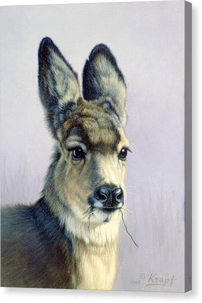 Mule Deer Canvas Print - Winter Forage-fawn by Paul Krapf