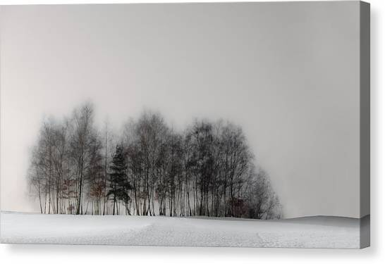 Winter Forest Canvas Print by Gilbert Claes