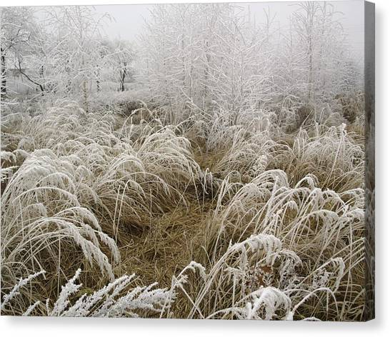 Winter Grass Canvas Print by Magdalena Mirowicz
