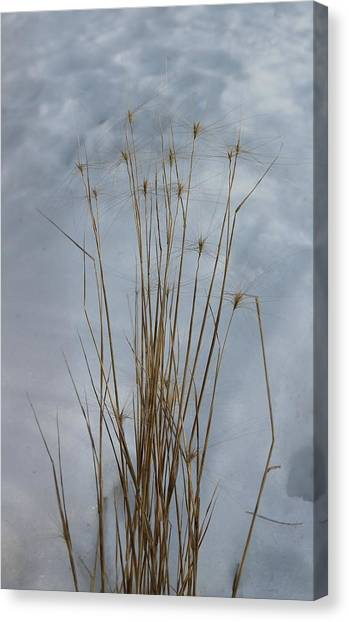 Winter Grass Canvas Print by Susan Copley