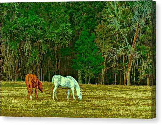 Winter Grazing In North Florida Canvas Print