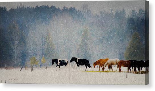 Winter Horses Canvas Print