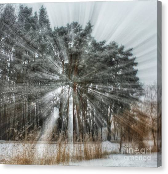 Winter Light In A Forest Canvas Print