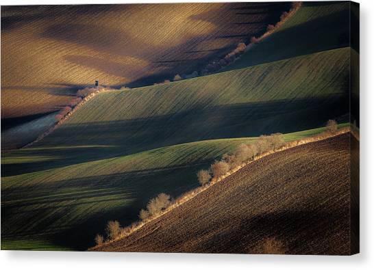 Shrub Canvas Print - Winter Long Shadows by Marek Boguszak