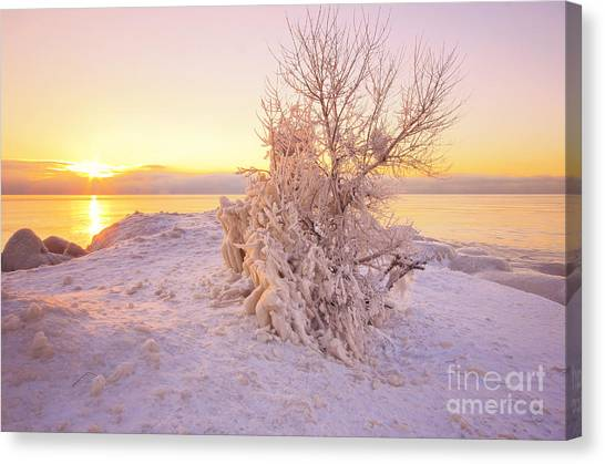 Winter Sunrise Canvas Print by Charline Xia
