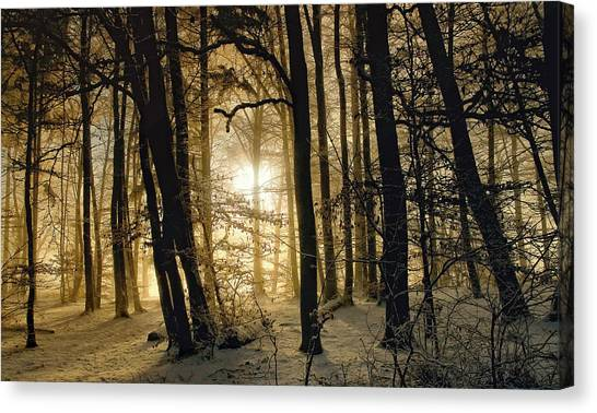 Winter Morning Canvas Print by Norbert Maier