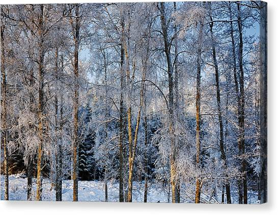Winter Nature Ans Scenery Canvas Print