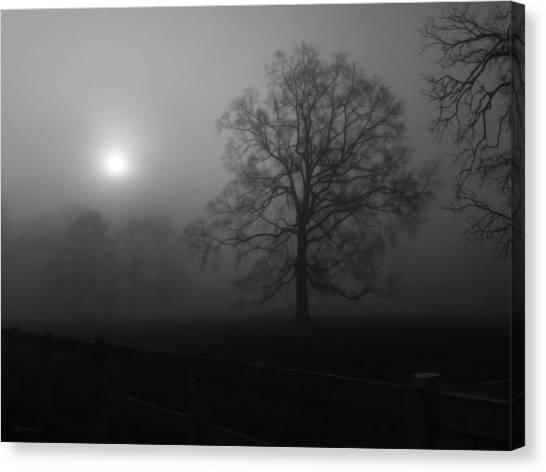 Winter Oak In Fog Canvas Print