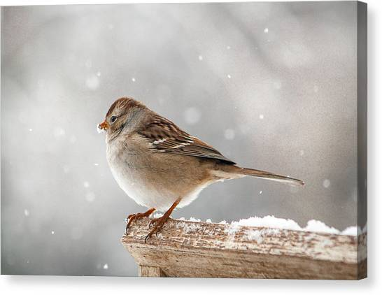 Winter Perch Canvas Print